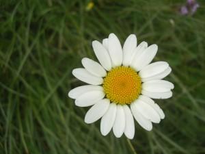 Frühlingszeit - Wellnesszeit